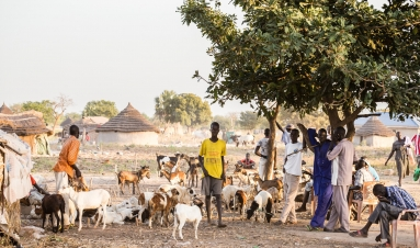 Peace and resilience in South Sudan